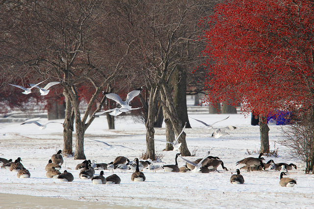 Photo shows Nature in a Chicago Winter